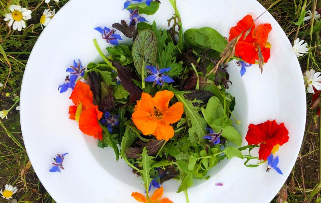 Jetzt in Krämers Hofladen – Essbare Blüten und Wildkräuter Mix